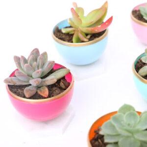 small colourful succulent planters
