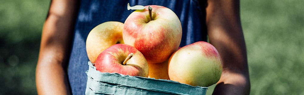 kid holding basket of apples apple picking