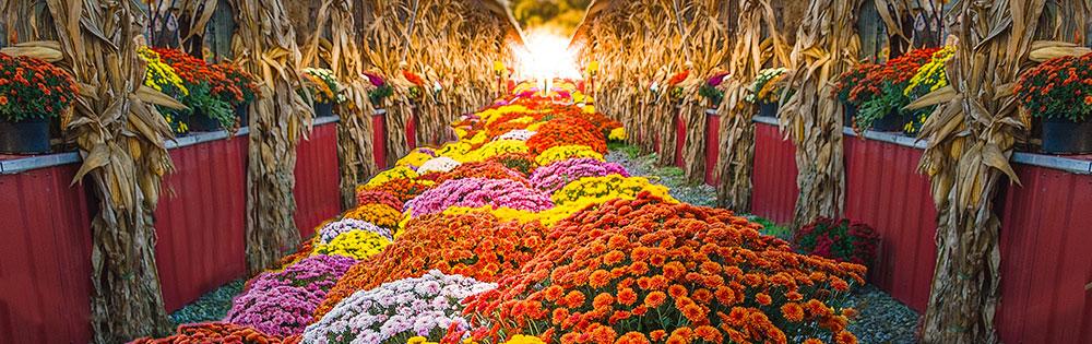 fall festival flowers pumpkins